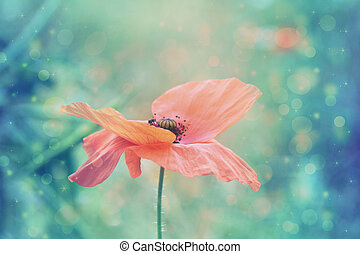 Beautiful red poppy in artistic soft colors with bokeh...
