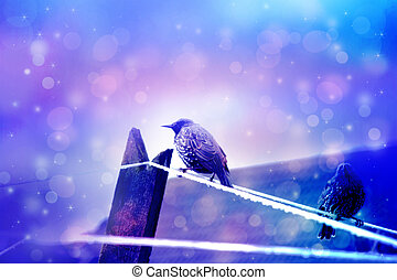 Dreamy winter scene two starling birds sittin on wire with...