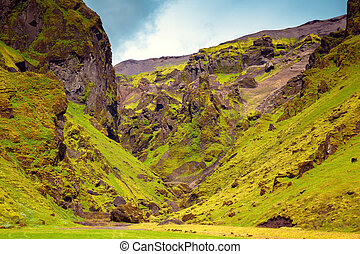 The green grass - Canyon Pakgil - green grass and moss on...