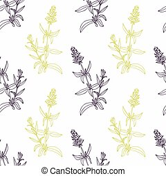 Hand drawn hyssop branch wirh flowers stylized black and...