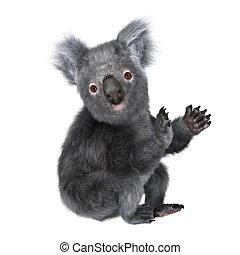 koala - Image of a koala