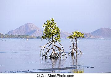 Mangrove treesSumbawaIndonesia