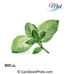 Watercolor mint plant isolated in white background