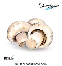 Watercolor champignon plant isolated in white background