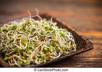 Mix of green young sprouts in plate
