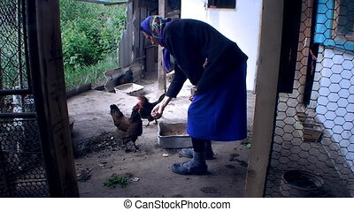 the woman feeds chicken from hands