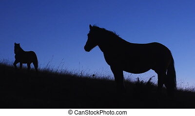 Horses on the Hill in the Twilight - Wild Horses on the Hill...