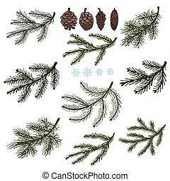 Spruce branches with Pine cones set - Spruce tree green...