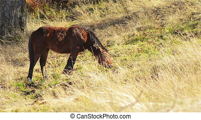 Horse, Foal Grazing in Mountain Pastures in the Autumn Sunny...