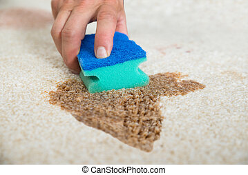 Janitor Cleaning Stain On Carpet With Sponge - Cropped image...