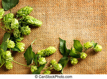 Fresh hop on burlap close up Green hop cones Brewing concept...
