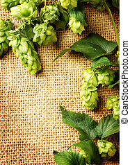 Fresh hop with leaves and cones close up on burlap...