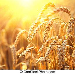 Golden wheat field. Ears of wheat closeup. Harvest concept