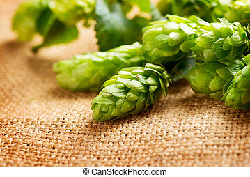 Hop closeup Green fresh Cones of hop over sack linen texture...