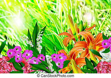 Summer landscape of lily flowers
