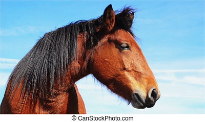 Horse on the Mountain - Wild Horse on Mountain Pasture and...