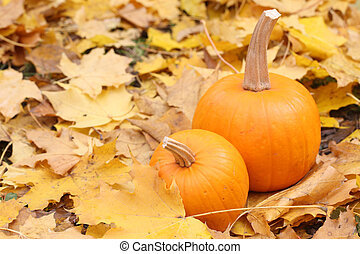 Two orange pumpkins on yellow leaves - Still-life with a...