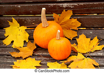 Still-life with a pumpkin in yellow leaves - Two orange...