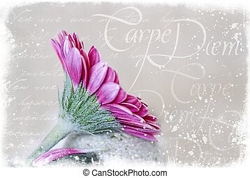 Gerbera and Pebble - pink orchid flower and illustration...