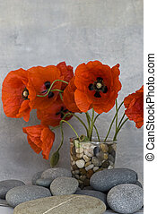red poppy flower and pebble