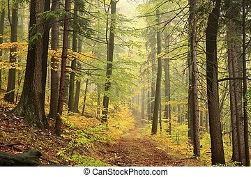 Autumn deciduous forest