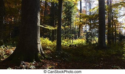 Autumn Morning in European forest