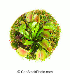 Carnivorous plant - Carnivorous flower muscipula. Top view.