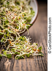 Mix of different sprouts in wooden surface