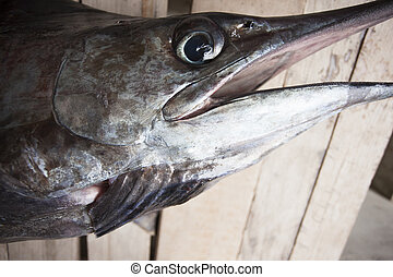 Headshot of a marlin or sailfish - Close up of the marlin or...