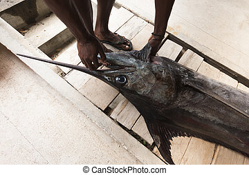 Man touching a large sailfish - Sailfish or marlin being...