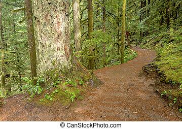 Footpath leads through a rain forest - Oregon trail leads...