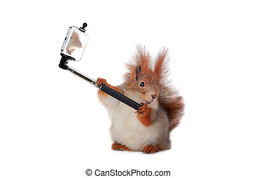 squirrel - beautiful squirrel taking a selfie together with...