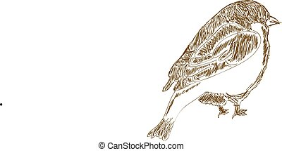 Vector hand drawn bird - Vector little hand drawn bird...