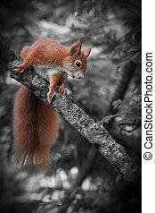 Red squirrel (Sciurus vulgaris) eating close-up