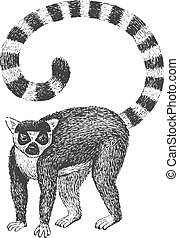 Lemur Engraving Illustration - Ring-Tailed Lemur - Classic...