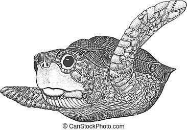 Sea Turtle Engraving Illustration - Sea Turtle - Classic...