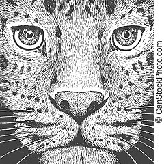 Leopard Engraving Illustration - Amur Leopard - Classic...