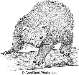 Binturong Engraving Illustration - Binturong on the Tree -...