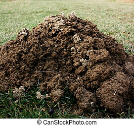Molehill - An mole hill on a green field