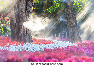 flower garden (cyclamen flowers)