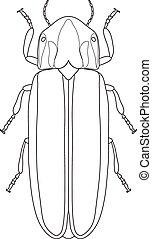 Firefly beetle Lampyridae. Sketch of Firefly beetle. Firefly...