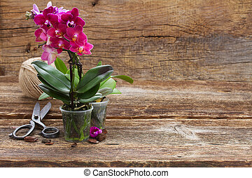Spring violet orchids - Violet orchids on wooden background,...