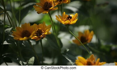 Bumblebee flies by flower