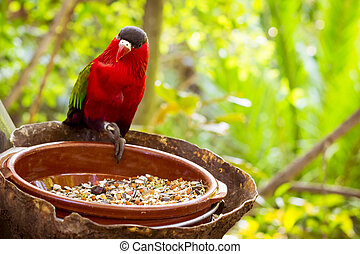 Bright parrot is feeding from bowl with seeds in Loro Park...