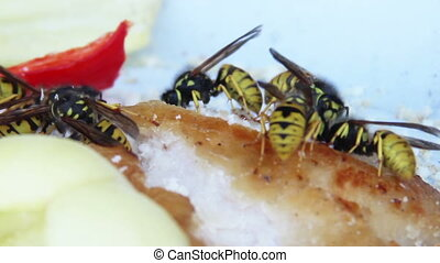 wasps - close-up wasps eat the lard and pepper