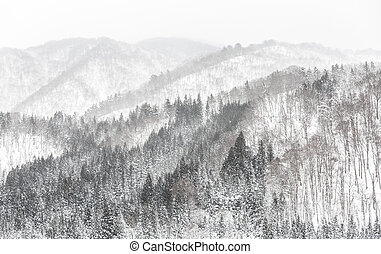forest Snowfall - Beautiful Snowfall winter landscape with...