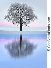 Tree with rime frost in winter landscape