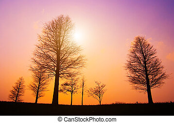 Trees in peaceful winter evening, after sunset