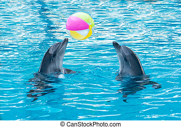 two dolphins playing ball in dolphinarium, Skadovsk, Ukraine
