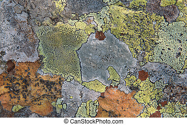 lichen on stone - Texture Of Multi-Colored Lichen On A Rock